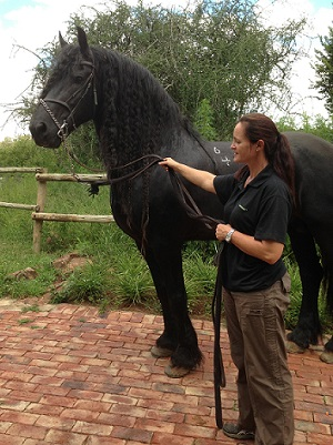 canterbury equine vet in pretoria with patient